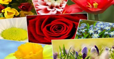 Beautiful flowers names and pictures