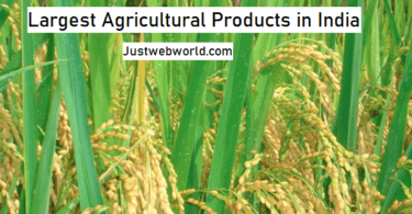 Top Agricultural Products of India