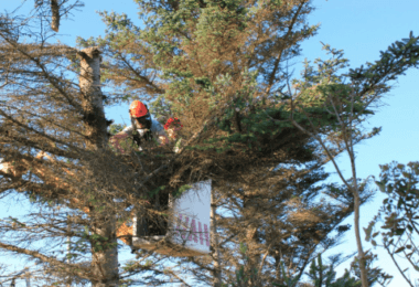 Professional Pruning Tips
