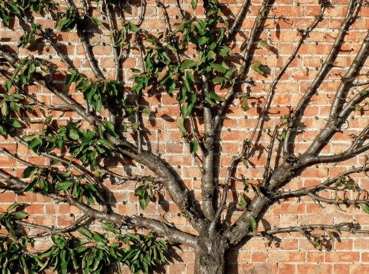 Pruning Tips and Techniques