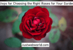 Choose the Right Roses for Your Garden