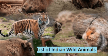 List of Indian Wild Animals