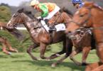 Horse racing - Sport