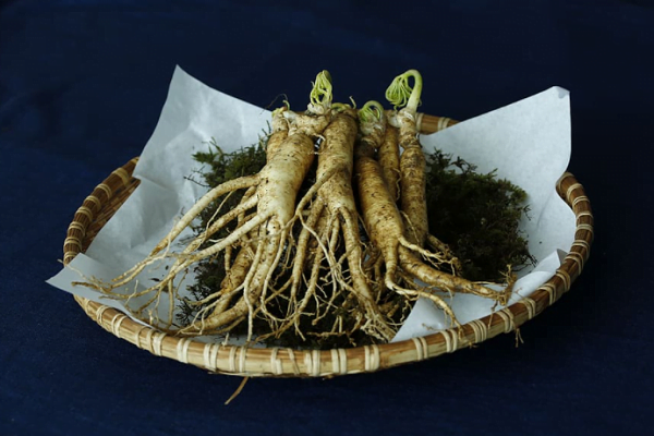 Tips For Growing Ginseng From Seed