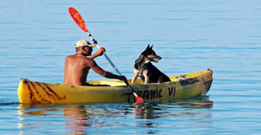 Guide to Kayaking With Your Dog