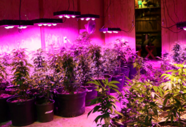 LED Grow Lights for a Grow Op